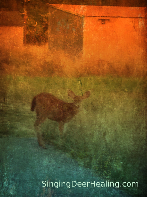Deer Song - photo art by Jane Valencia (c) 2014