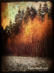 Forest in Winter - photo art by Jane Valencia
